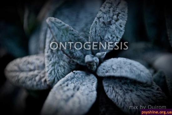 Quirom - Ontogenesis